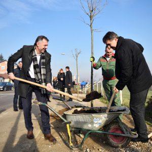 Нови дрворед на Петрићевцу