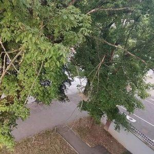 """""""Грађанска патрола"""": Пријављена сасушена стабла у дрворедима"""