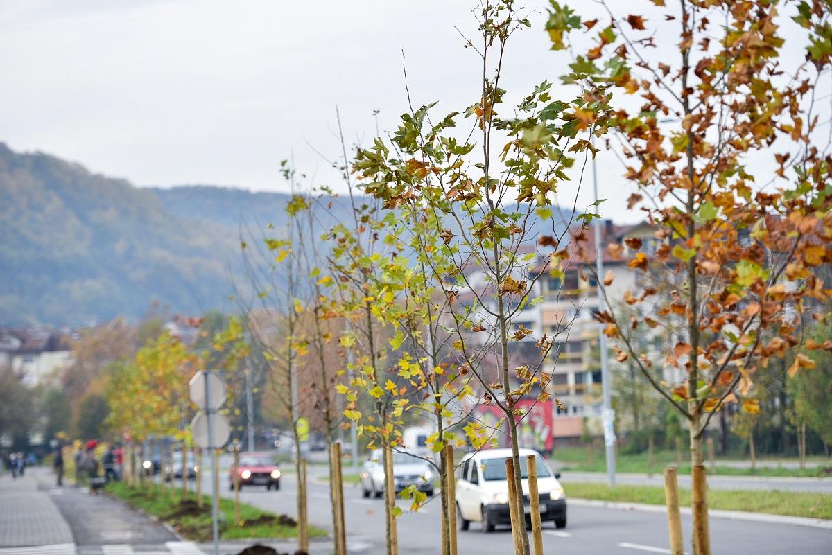 И прошле јесени засађено више нових дрвореда (Фото архива)