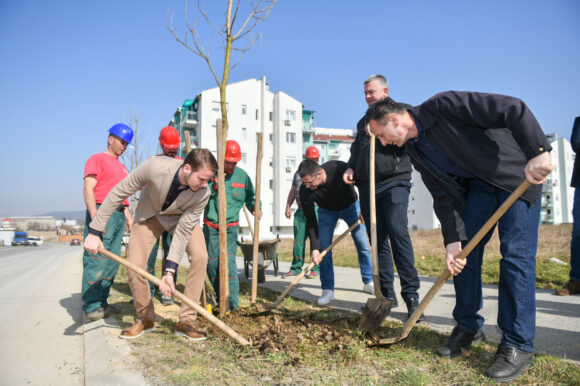 Почела прољећна садња дрвећа: Листови каталпе ће красити Аду