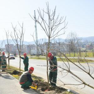Gradski drvoredi bogatiji za 200 sadnica