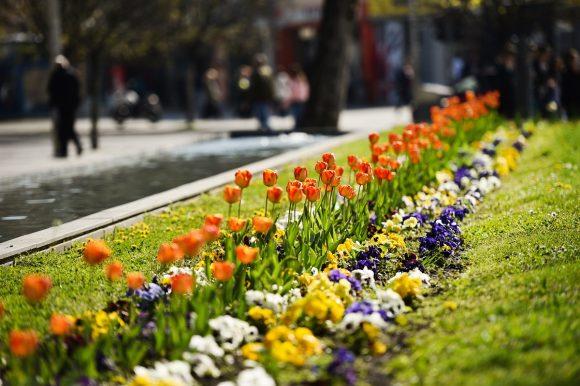 Бања Лука у мају добија фестивал цвијећа: Позив учесницима да се пријаве