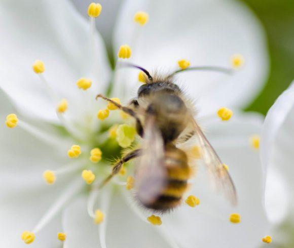 Концентрације полена