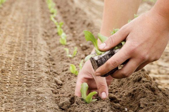 Јавни позив за додјелу подстицаја и премија за развој пољопривредне производње