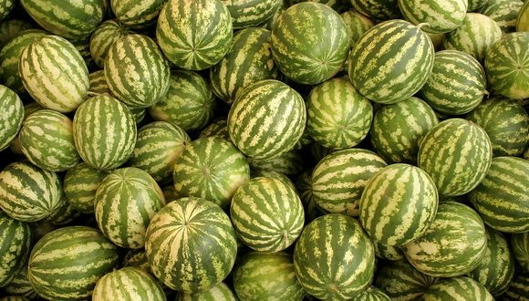 Јавни оглас о додјели локација за продају лубеница