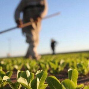 Помоћ од милион КМ: У току исплата подстицаја за пољопривреднике