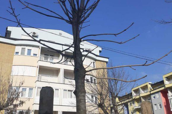 Попуњен дрворед у Булевару Степе Степановића